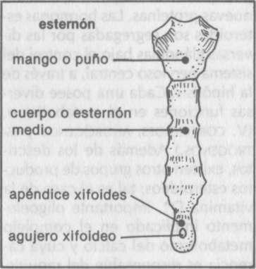 esteroideas significado